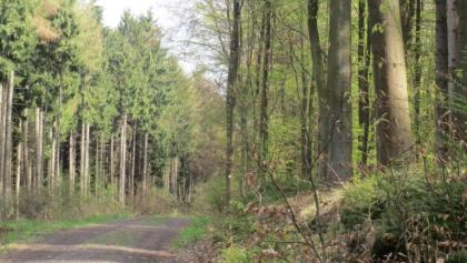 Waldweg entlang des Limes