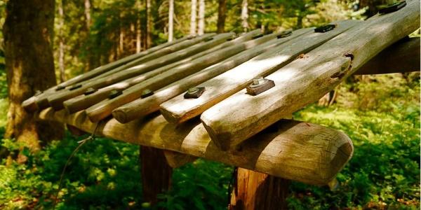 Das Waldxylophon - wie hört sich Holz an?