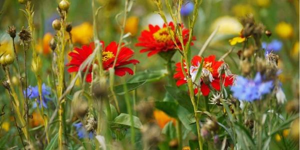 Blühende Wiese im Dernbachtal