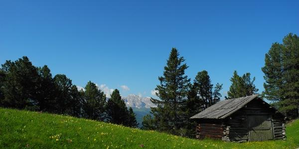 Die ersten Almwiesen nach dem Aufstieg durch den Wald.