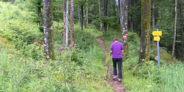 gemütlicher Waldpfad bei Grünau
