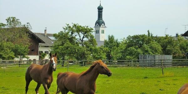 Pferdekoppel mit Rimstinger Kirche