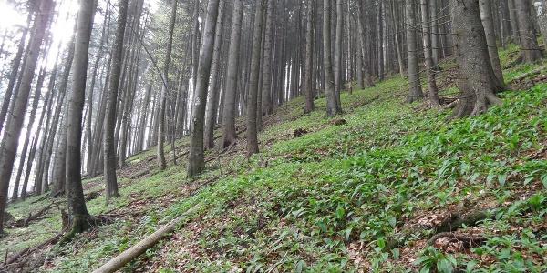 Ein sehr steiler Berghang führt zum Kruckenbrettl hinauf.