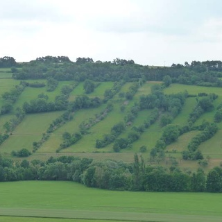 Die Steinriegel zwischen Weikersheim und Elpersheim