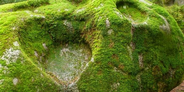 Schonacher Schalensteine