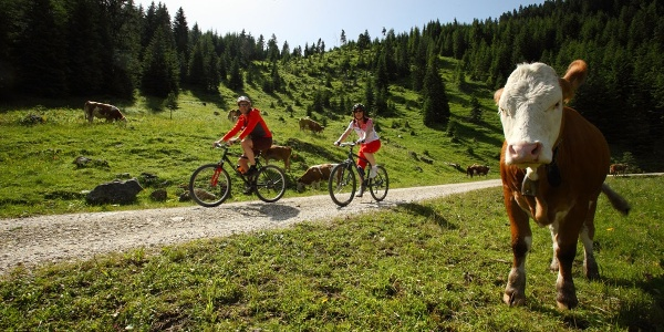 Mountainbiketour Pürschlinghaus