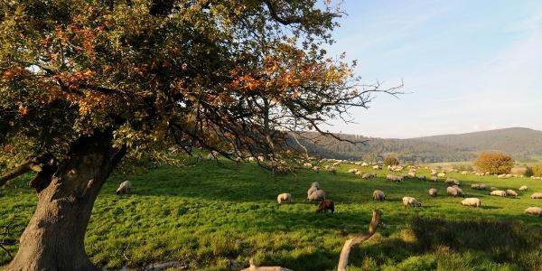 Landschaft in Hann.Münden