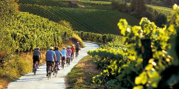 Wein Panorama Weg Heilbronn