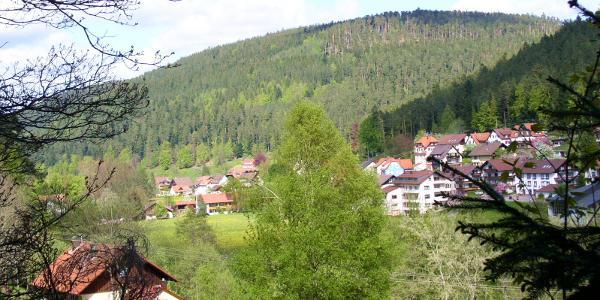 Blick in das Tal der Großen Enz in Enzklösterle