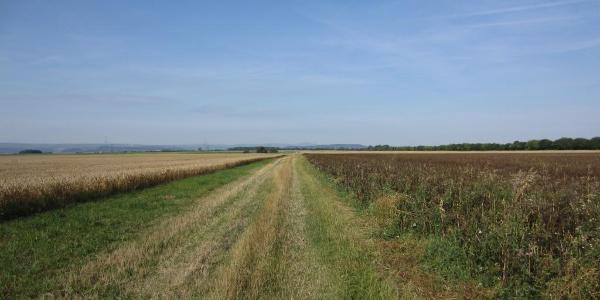 Weg nahe Schmira (Aug. 2013)