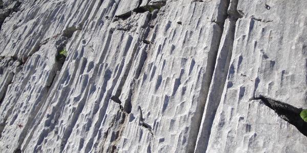 Dachsteinkalk vom Feinsten