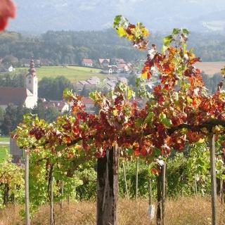 Weingarten Tour