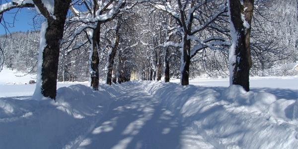 Zufahrt zur Villa Sonnwend Nationalpark Lodge.