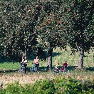 Radfahren Apfelbäume