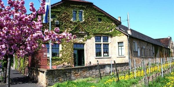 Winzerverein Deidesheim eG 2