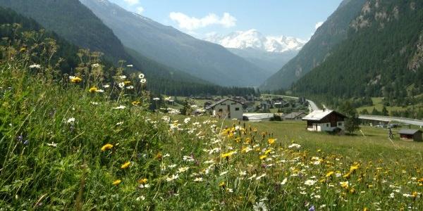 Entlang des Dorfwaldwegs in Randa