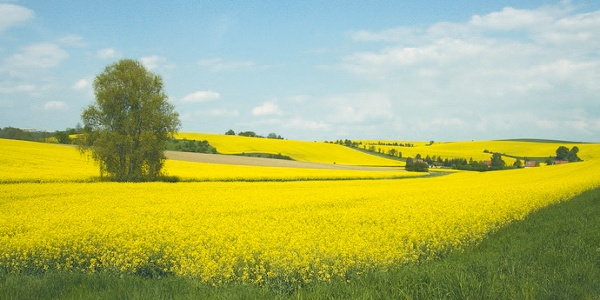 Landschaftsidylle im Frühling