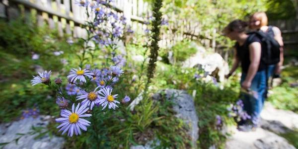 Alpski botanični vrt