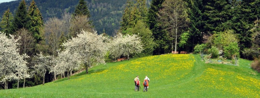 Hochalmgebiet Kernhof-Bosenstein