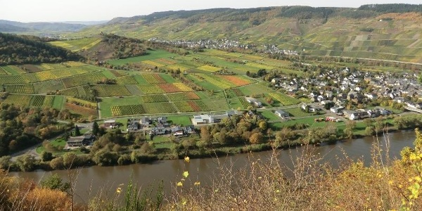 Looking from the vineyards over the Moselle loop at Kröv. On the right in the foreground is the Wolf district of Traben-Trarbach, in the background you can see Kröv and the ruins of Wolf Monastery at the top of the hill.