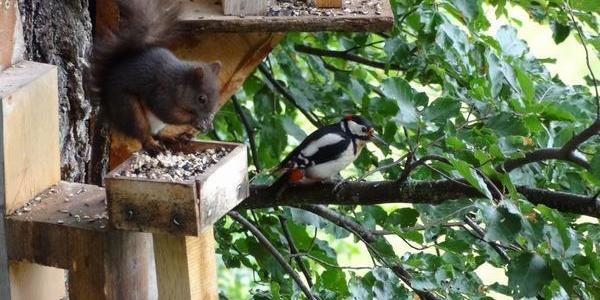 Haus Helga Stocker, Eichhörnchen und Specht