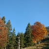 Wälder bei Ammergau