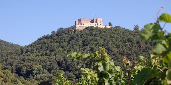 Blick zum Schloss