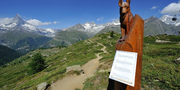 Along the Marmot Trail with its wooden sculptures