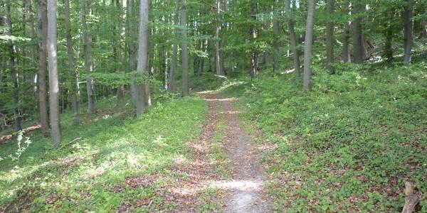 Waldpfad südlich Rehlingen