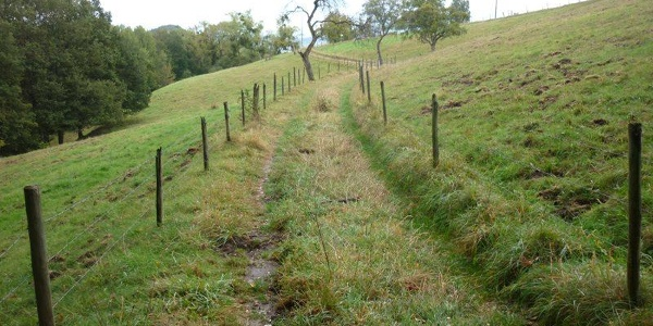 Meadow path over pasture land with old fruit trees along the Sirzenich stream