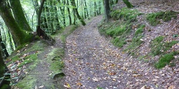 Forest path above the Sirzenich stream