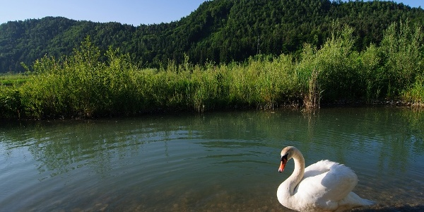 Vogelschutzgebiet Föderlach