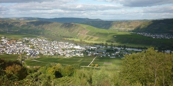 View overlooking Leiwen (on the left) and Trittenheim (on the right)
