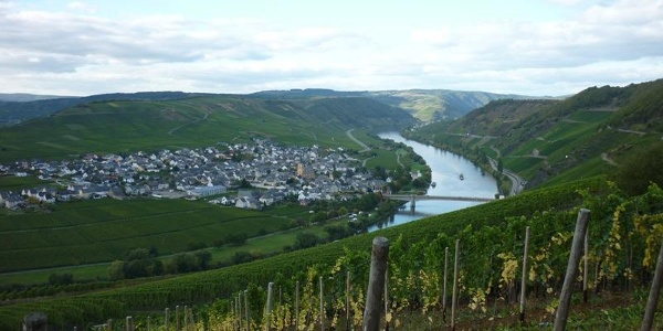 Surrounded by vineyards: Trittenheim nestling in the famous Moselle loop, seen from the Zummethöhe