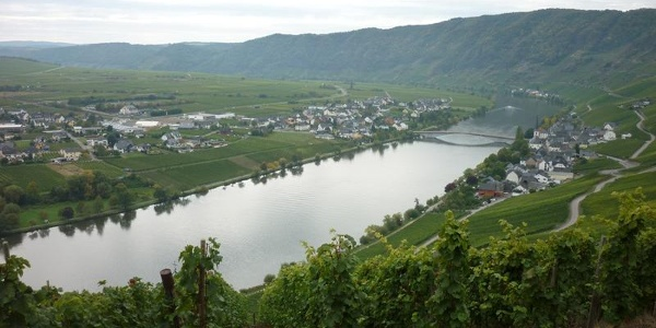 The River Moselle at Piesport