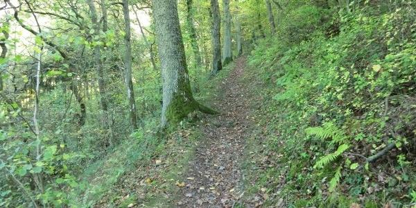 Pad door het Kallenfelstal