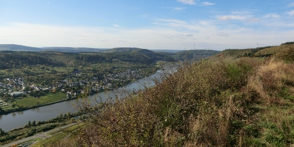 Looking along the edge of the slope downstream Wehlen lies below in the Moselle Valley
