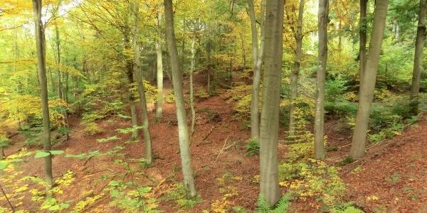 Colourful beech forests near Ürzig
