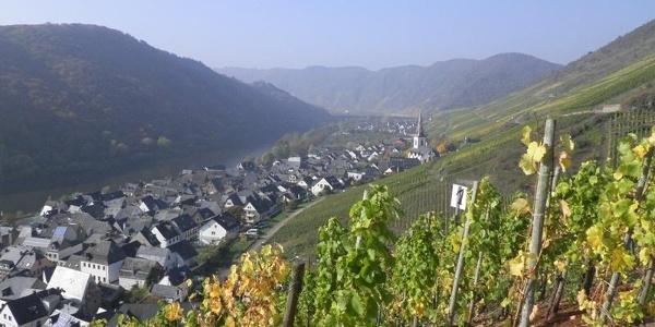 Vue sur Ediger-Eller depuis les vignobles