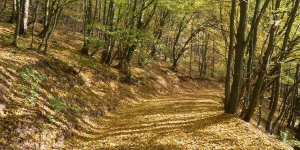 Waldpassage zwischen Ediger und Nehren