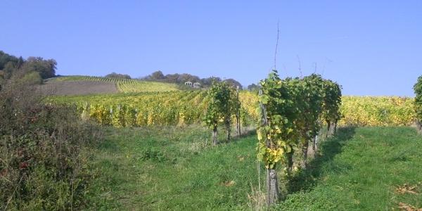 Blick aus den Weinbergen auf die Römergräber Nehren