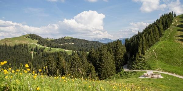 Nordic Walking Höhen-Trail Hörnle - am mittleren Hörnle