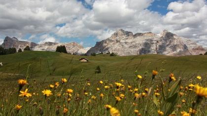 Blumenreich Wiesen inmitten der Dolomiten