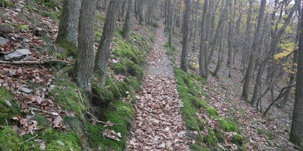 Path in the Dortebach Valley