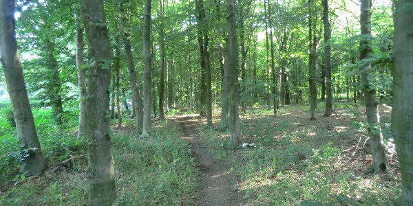 hinein in den Benrather Forst