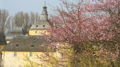 Burg Gudenau im  Frühling