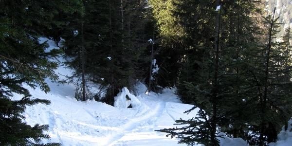 Dann wieder flacher durch den tief verschneiten Wald.